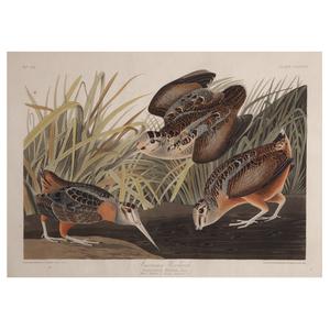 John James Audubon, American Woodcock